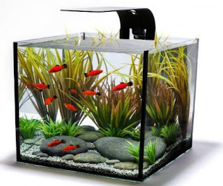 Vastu Tips For Aquarium