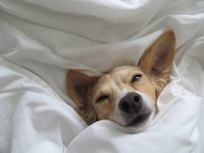 hotel dog friendly, hotel dla psów poznań
