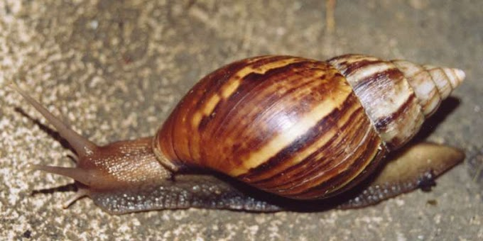 How to Start Snail Farming in Nigeria in Practical Easy and Simple Way