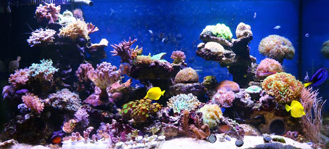 Aquarium ? la Maison: Les resultats du concours photo : palmares ...