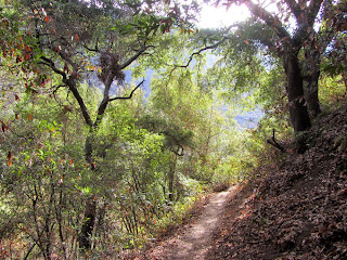 Morning sun filters through coast live oaks on Fish Canyon Trail in autumn
