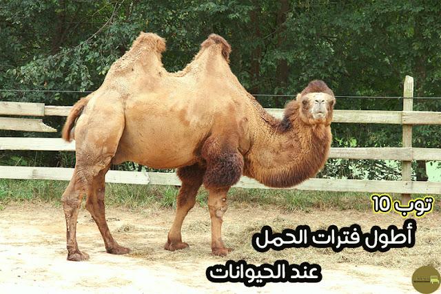 اطول مدة حمل عند الحيوانات