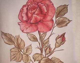 Sketch of Rose
