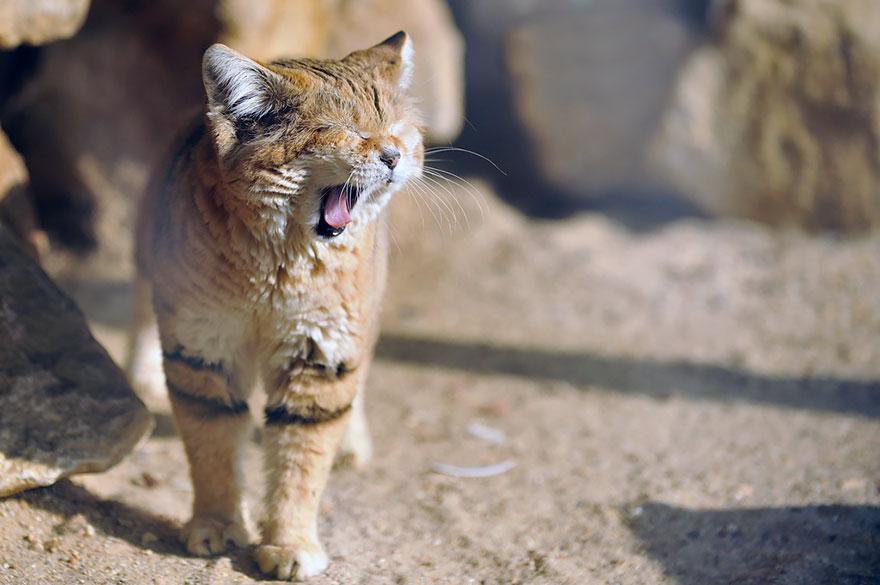 sand-cats-kittens-forever-9
