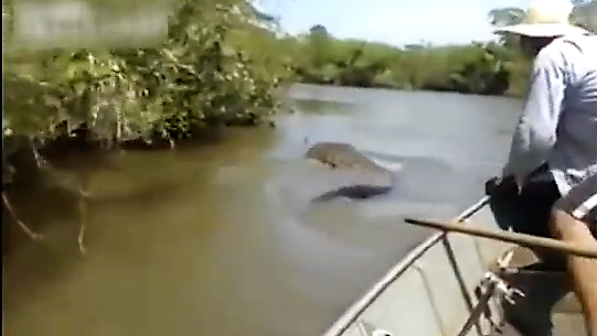 Brazilian Boaters Come Across Giant Anaconda