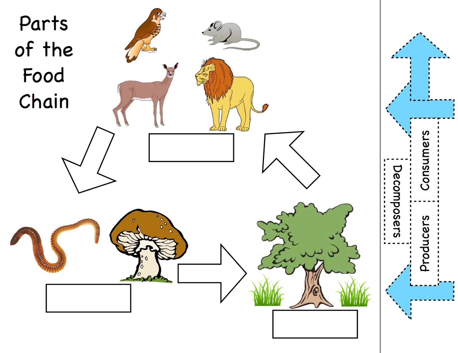 Food Chain Worksheet 3rd Grade
