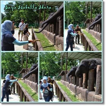 Melawat Kuala Gandah Elephant Sanctuary-Tempat gajah