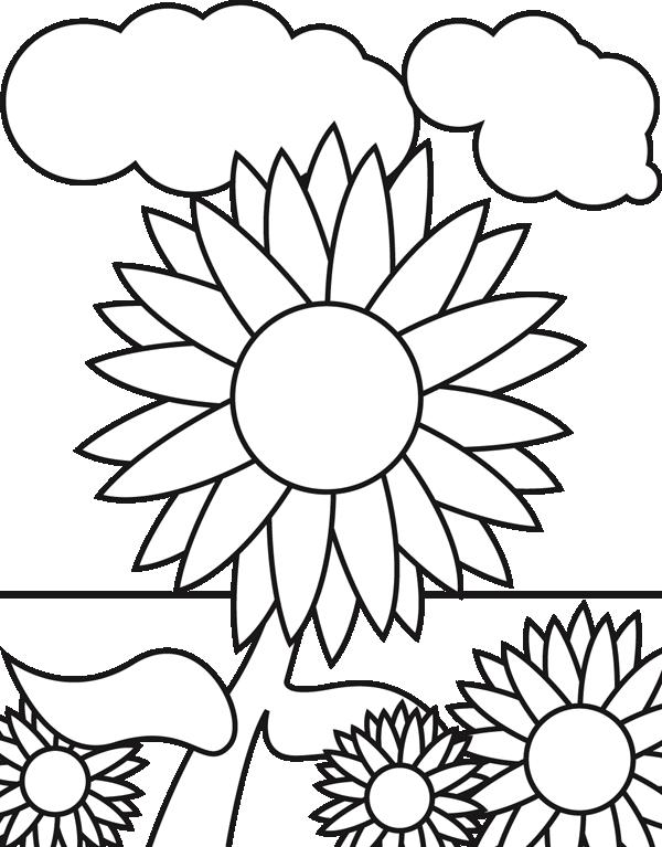 23 Gambar Bunga Matahari Untuk Tk Paling Keren