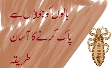 Get Rid of Lice in Urdu