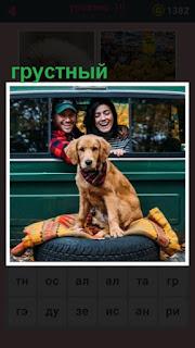 на колесах сверху сидит грустная собака и смотрит впереди себя