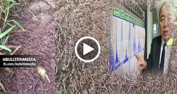 Video Puluhan Ribu Luwing Keluar Dari Dalam Tanah Duduga Pertanda Gempa Bumi Besar Bakal Berlaku