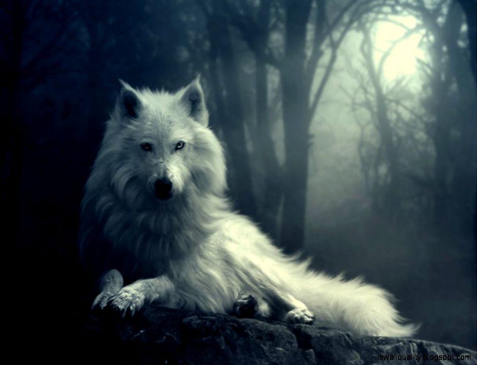Hd White Mystic Wolf Wallpaper Desktop Wallpapers Quality