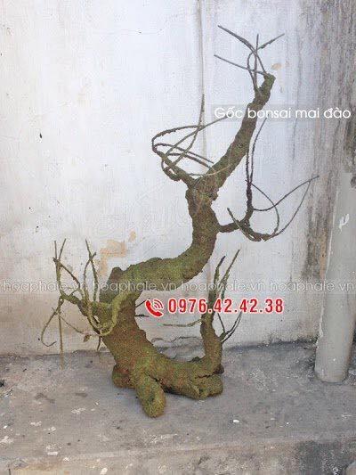Goc bonsai mai dao the truc cong