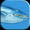 Blue Whale Game Apk Mod