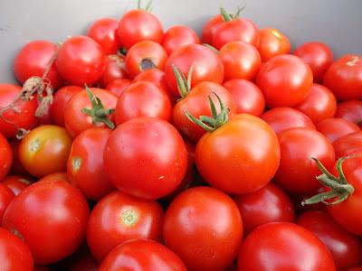 Resultado de imagem para Produção alta de tomate empurra preço para baixo em Minas