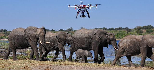 Monitoring wildlife of Drone