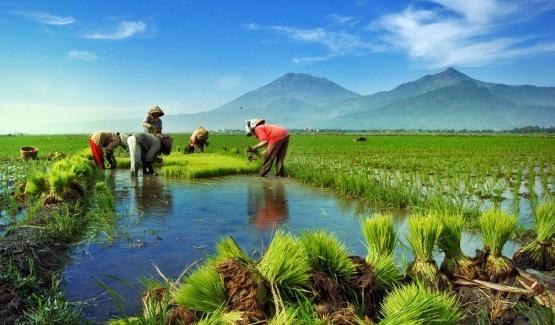 Image result for pembangunan berkelanjutan di indonesia