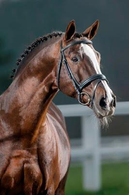 Hermosa imagen de caballo marron