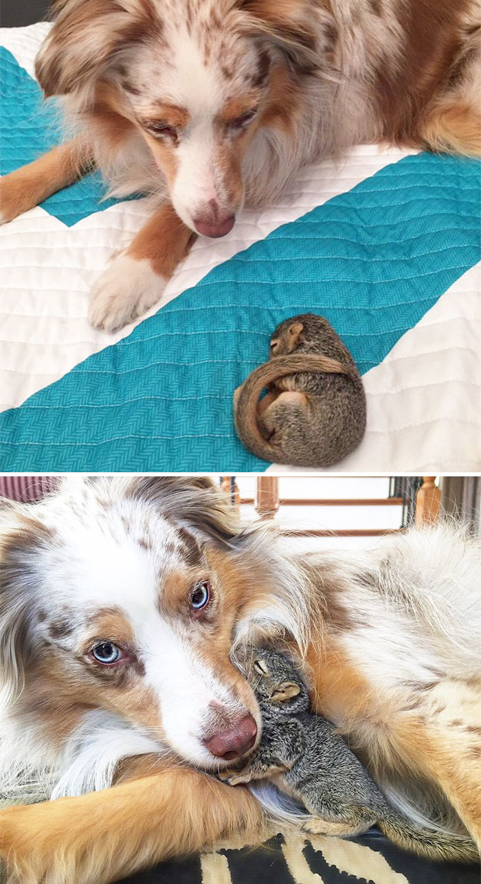 50 Heart-Warming Photos of Animals Growing Up Together - Callie And Stewart Then And Now