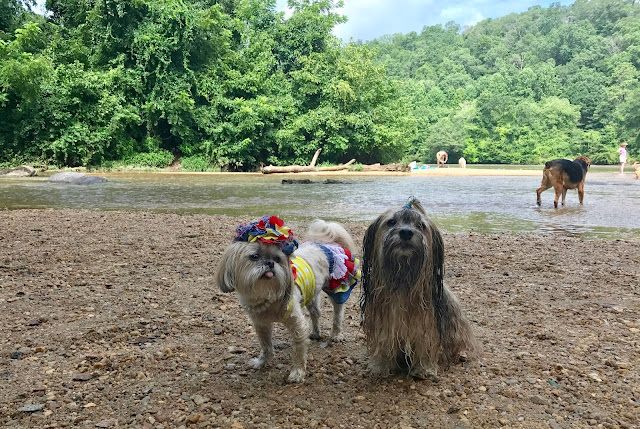 Rocco Havanese and Sparkle the Diva