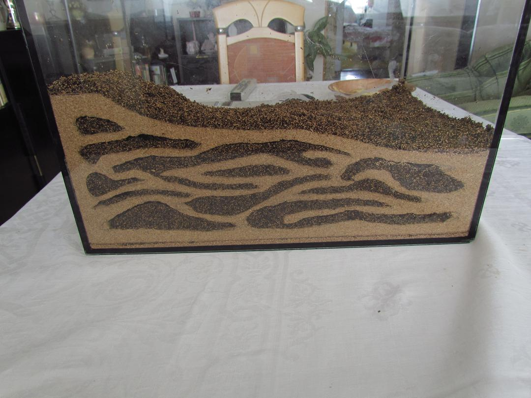 Comprare un formicaio  Trattamento marmo cucina