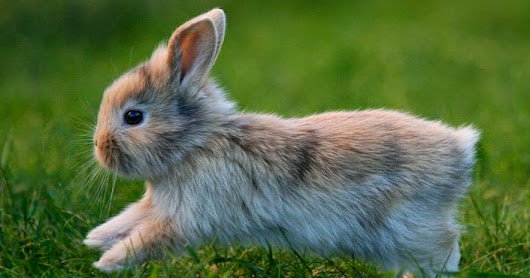 Using Bunnies in Epic Fantasy