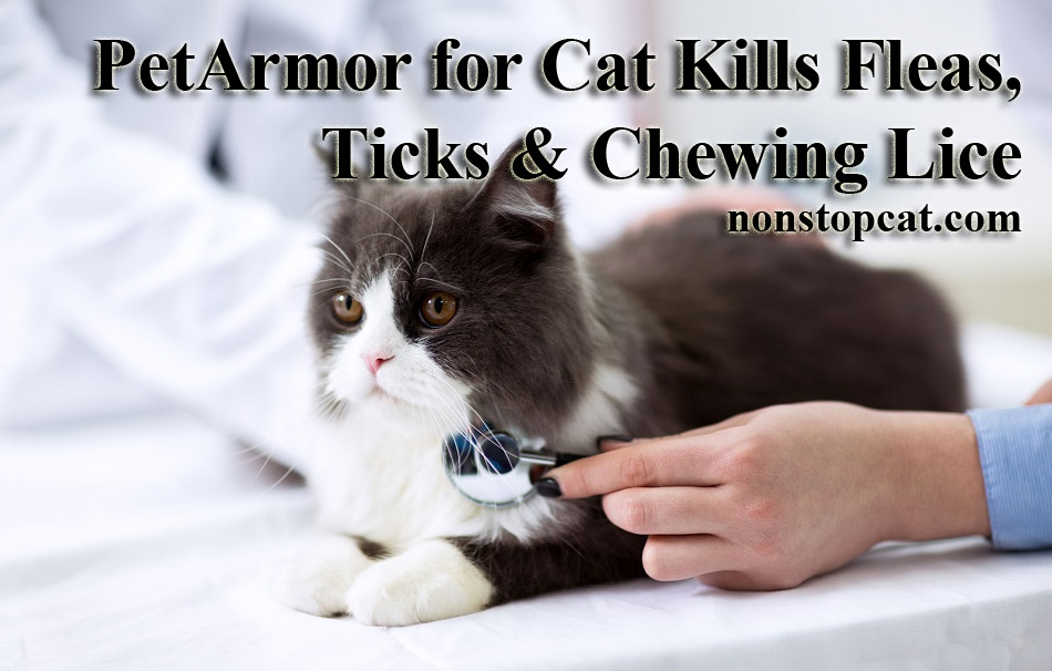 PetArmor for Cat Kills Fleas, Ticks & Chewing Lice