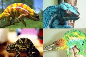 Pengertian dan Contoh Adaptasi Tingkah Laku pada Manusia, Hewan dan Tumbuhan