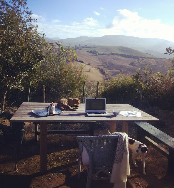A dog, a cat and a table with a Tuscan view
