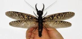 Új rovarfajt fedeztek fel Kínában