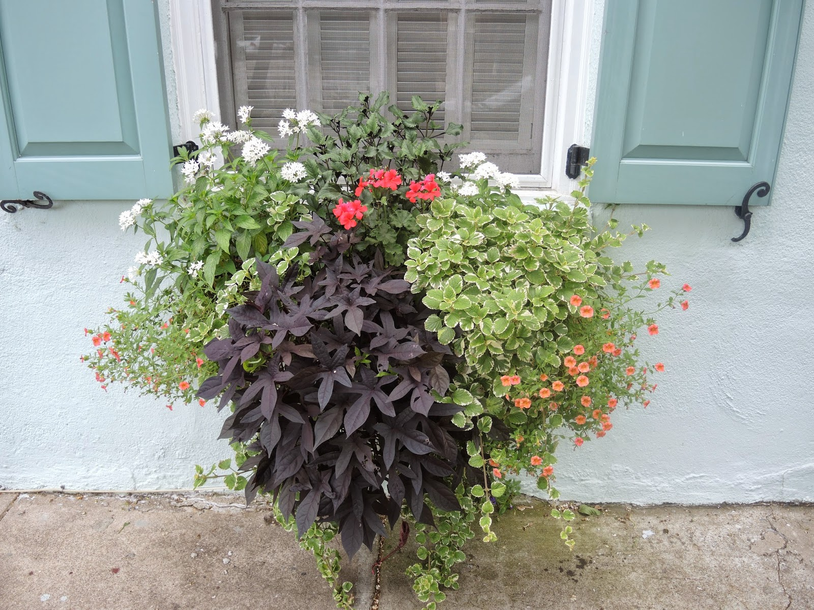 charleston sc downtown home battery window boxes