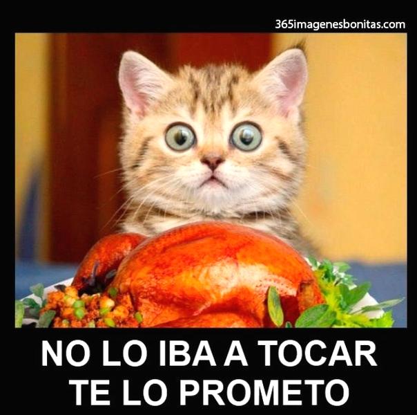 Imagenes Graciosas Chistosas Memes gatitos bebe