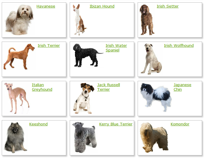 Dog Breeds List With Picture Alphabetical