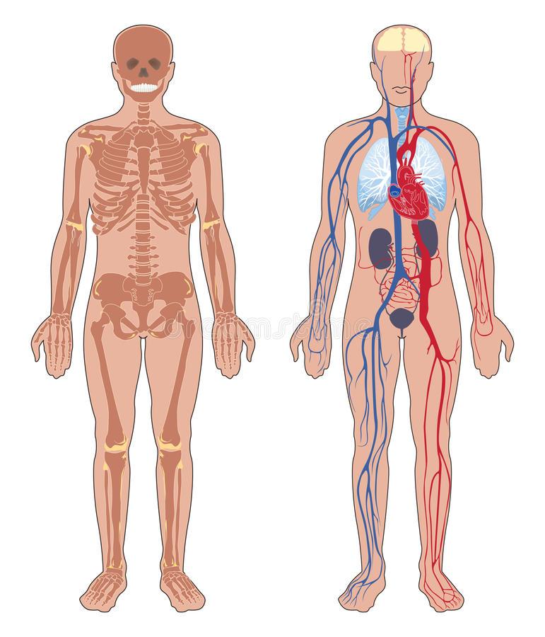 Centro de Copiado JK: Anatomía del Cuerpo Humano