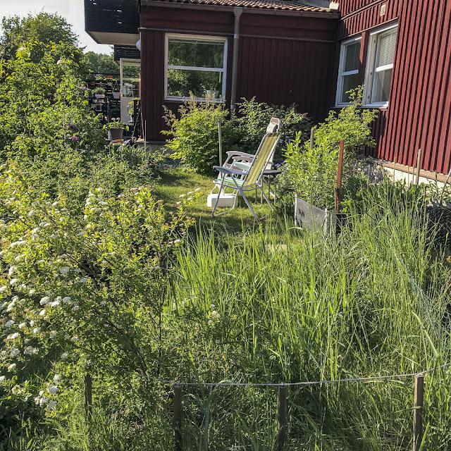 garden, trädgård