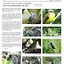 Cocorná: una ventana exquisita para el avistamiento de aves
