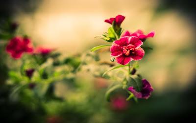 flowers-macro-photos-image