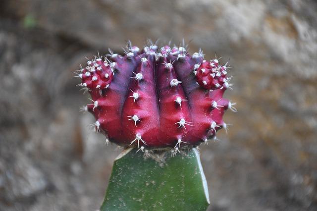 xuong rong no hoa dep nhat 2