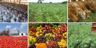 Let's Learn:How Nigerian Government Can Achieve The Goal of Providing Food and Security