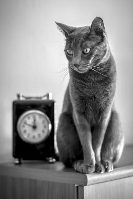 El gato del tiempo, de Carlos Larios