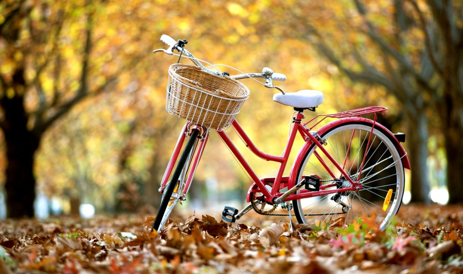 bicycle autumn leaves hd