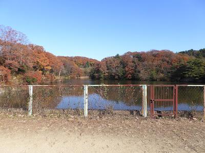 白旗池 紅葉