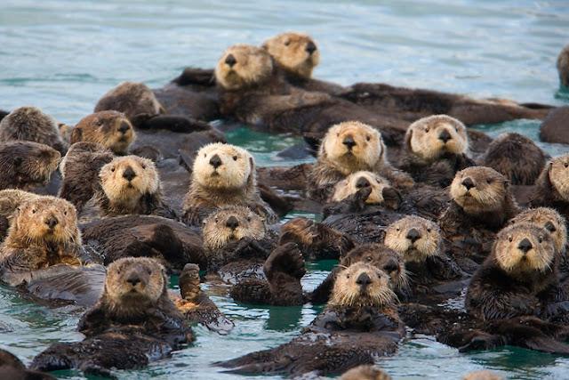 Otters Facts/Udbilao