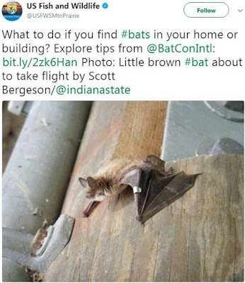 Info on Bats | What to do if you find Bats in your home or building