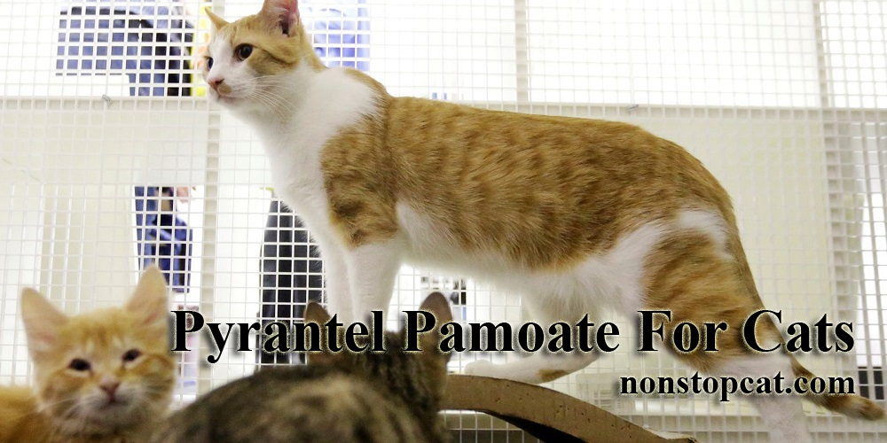 Pyrantel Pamoate For Cats