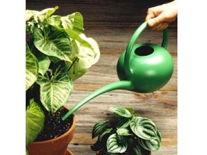 gardening ideas in telugu