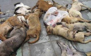 мъртви кучета