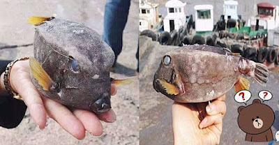 Nelayan Berhasil Menemukan Ikan Yang Berbentuk Aneh