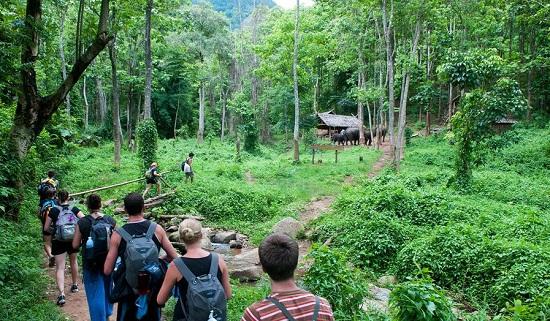 Vườn quốc gia Cúc Phương- Kinh nghiệm du lịch Ninh Bình