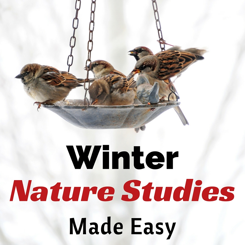 Winter Nature Studies Made Easy